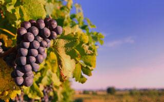 DISCOVER PIEMONTE WINE